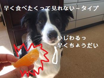 dog20080220 003