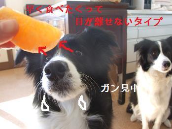 dog20080220 004