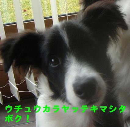 DSC00230.jpg