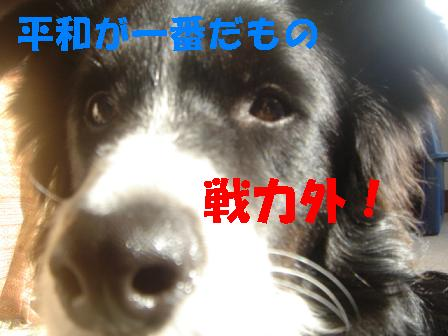 DSC04320.jpg