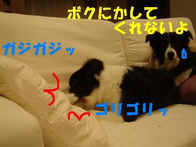 DSC04657.jpg