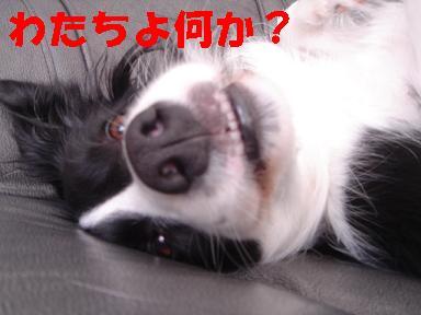 DSC04692.jpg