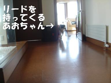 DSC04795.jpg