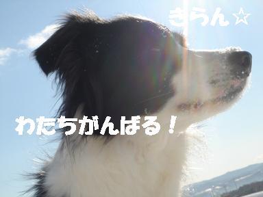DSC04841.jpg
