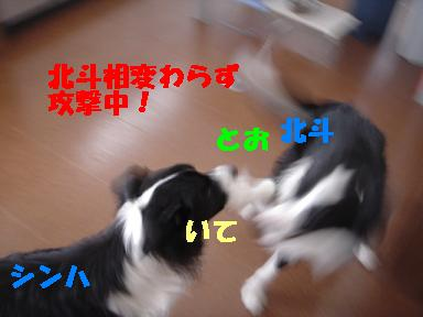 DSC04909.jpg