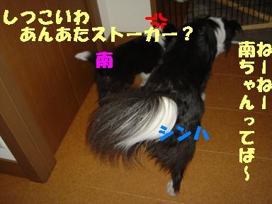 DSC04929.jpg
