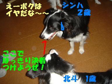 DSC04934.jpg