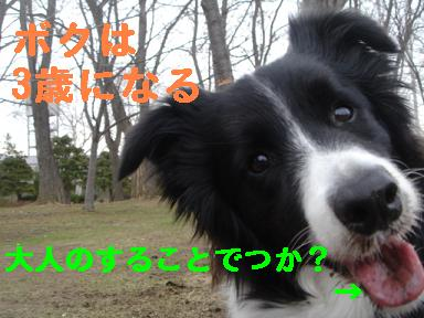 DSC05687.jpg