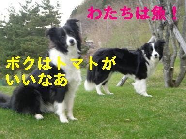DSC05868.jpg