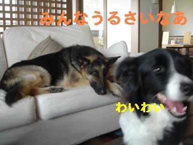 DSC06104.jpg