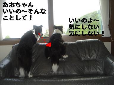 DSC06441.jpg
