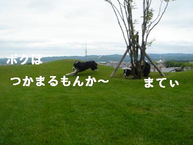 DSC06524.jpg