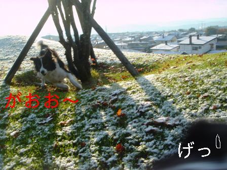 DSC07309.jpg