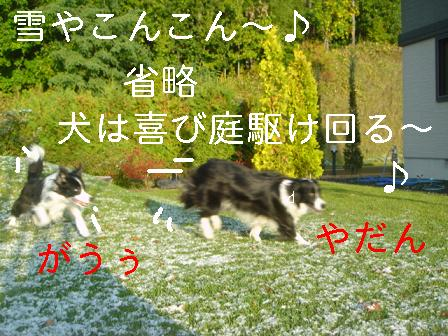 DSC07311.jpg