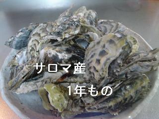DSC07566.jpg