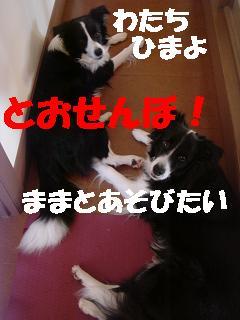 DSC07710.jpg
