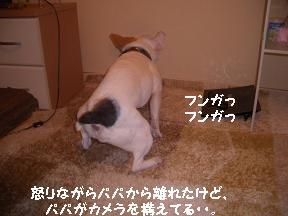 20050407010948.jpg