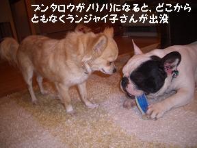 20050408000137.jpg