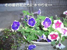 20050514092007.jpg