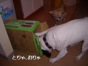 20050527004646.jpg
