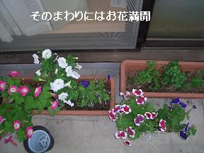 20050605100213.jpg