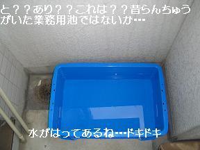 20050605100228.jpg