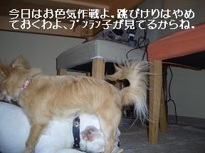 20050623004059.jpg