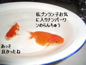 20050627100017.jpg