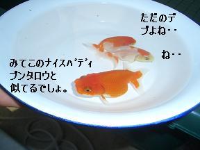 20050627100023.jpg