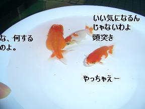 20050628095109.jpg