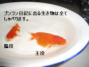 20050628095121.jpg