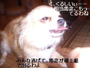 20050707223447.jpg