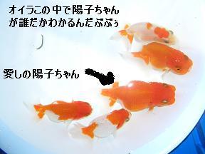 20050708141345.jpg