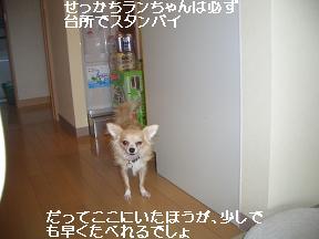 20050829234458.jpg