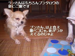 20050830222959.jpg
