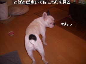 20050904003234.jpg
