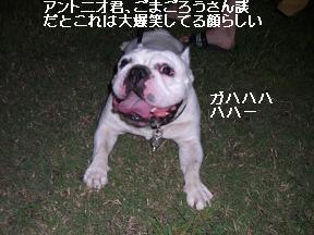 20050921011608.jpg
