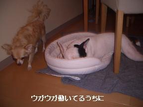 20050925080525.jpg