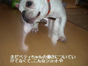 20051009111214.jpg