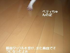 20051009111232.jpg