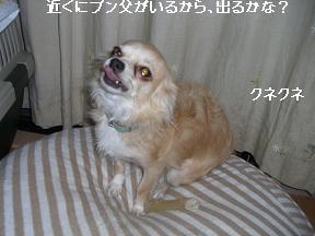 20051018234635.jpg