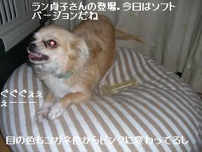 20051018234713.jpg