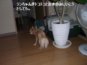 20051110104113.jpg