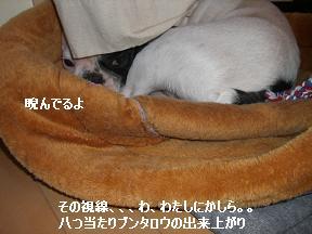 20051121161750.jpg