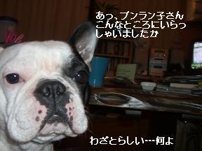 20051126084825.jpg