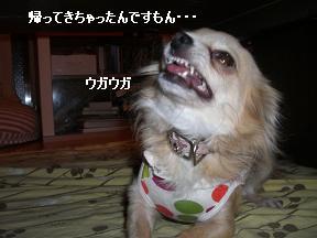 20051213100706.jpg