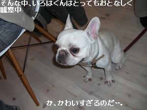 20051218104634.jpg