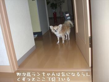 20060427002109.jpg