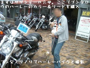 20060522104932.jpg