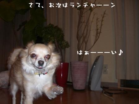 20060530111317.jpg